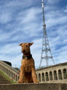 Doggo in Crystal Palace
